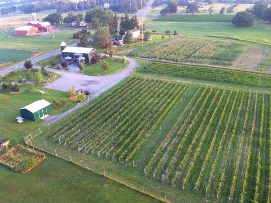 Liberty Balloon Company: Wine Country