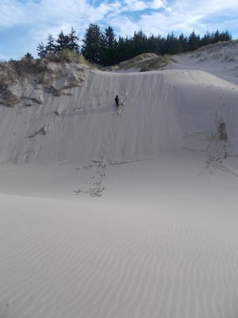 Oregon Dunes National Recreation Area: Climbing up a dune