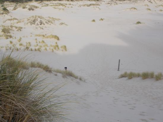 Oregon Dunes National Recreation Area: Looking down at my son who rolled down the dune