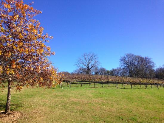 Arrington, TN: The vineyards