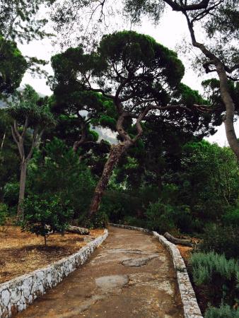 Gibraltar Botanic Gardens (The Alameda): недалеко от выхода