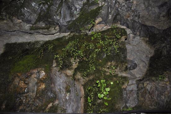 Roquefort Sur Soulzon, France : La cava
