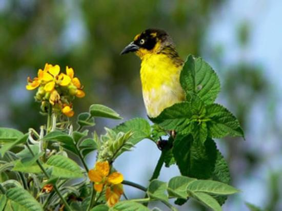 Uganda Safari Day Tours: tour packages include birding tours safari that are quite popular in this region.