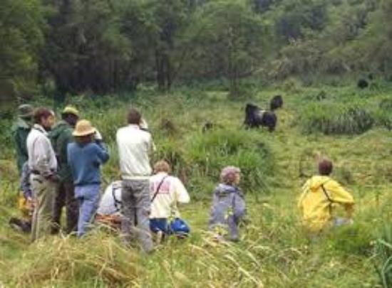 Uganda Safari Day Tours: we are extremely pleasure to explore you in the Uganda safaris and Uganda tour.