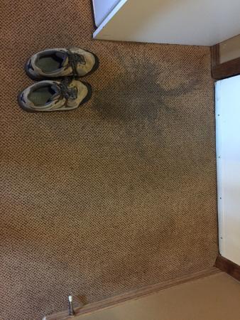 Georgetown Inn : Disgusting carpet stain