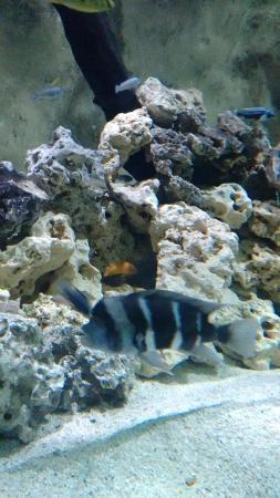Aquario de peixes grandes - Picture of Sao Paulo Aquarium, Sao Paulo ...