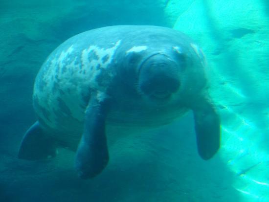 Polar bear colubus zoo aquarium picture of columbus Manatee aquarium