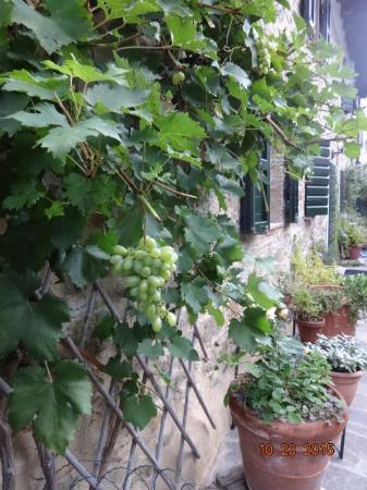 Aquilea, Ιταλία: Agrituristica - Grapes
