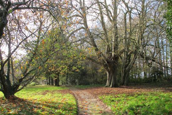 Couleurs d 39 automne picture of parc botanique de haute bretagne le chatellier tripadvisor - Parc botanique de haute bretagne ...