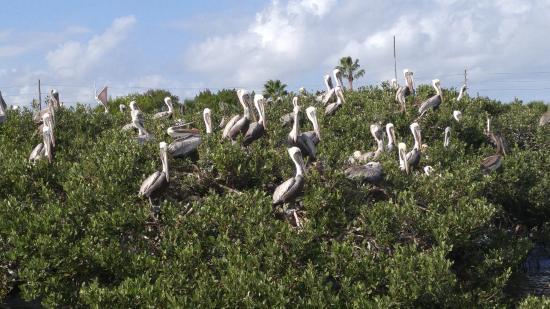 Marine Discovery Center: Island colony