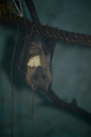 Borth, UK: Bat