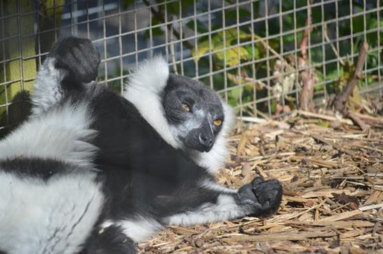 Borth, UK: Monkey thing
