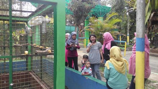 Banjarnegara Indonesia  city pictures gallery : Seruling Mas Wildlife Park Banjarnegara, Indonesia : Top Tips Before ...