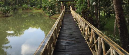 Sepilok Jungle Resort: One of the broad walks throughout the property