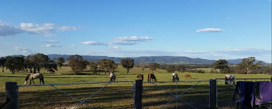 O'Connell, Australia: Agistment horses enjoying a sunny afternoon