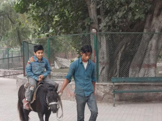 a visit of lahore zoo Under the directives, men who visit the zoo alone or with other male  lahore  zoo director hasan sukhera told the express tribune that these.
