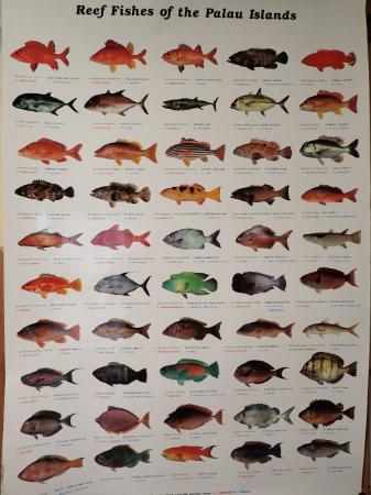 WCTC Shopping Center: FREE GIFT(FISH POSTER)