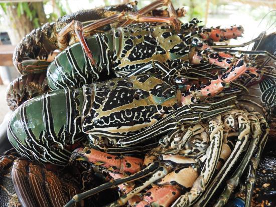 Papatura Island Retreat: crayfish for dinner
