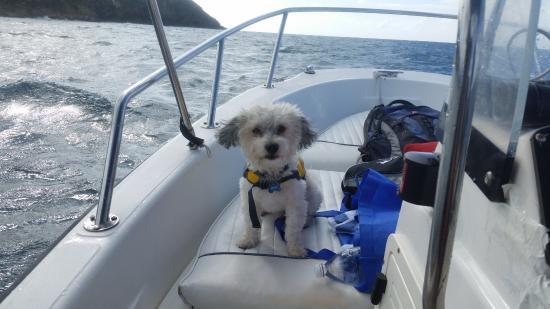 Κόλπος Simpson (Λιμνοθάλασσα), Άγιος Μαρτίνος: doggy on board!