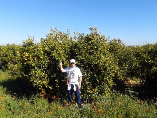 Via Verde de Denia: En los naranjos de la vía verde-2