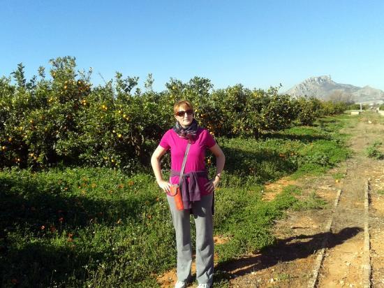 Via Verde de Denia: En los naranjos de la vía verde-1