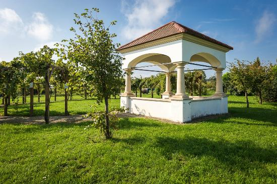 Mörbisch, Austria: Umgebung Weingarten
