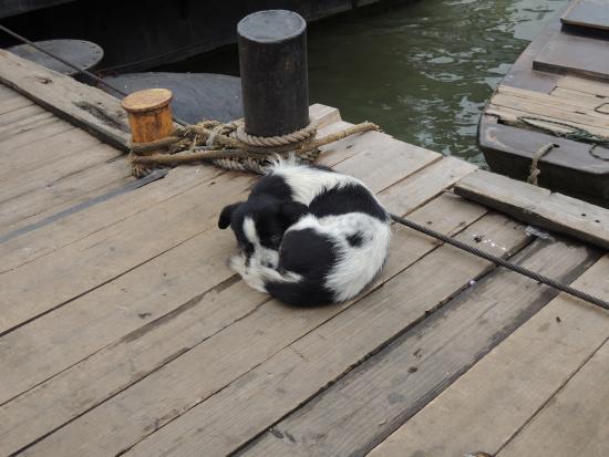 Old Pontoon : dog kept by boat people