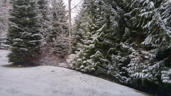 Twin Peaks Resort: View from Living Room window