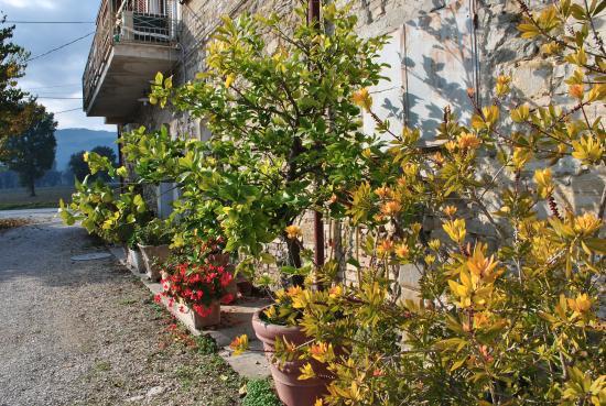 Cantalupo, อิตาลี: decori
