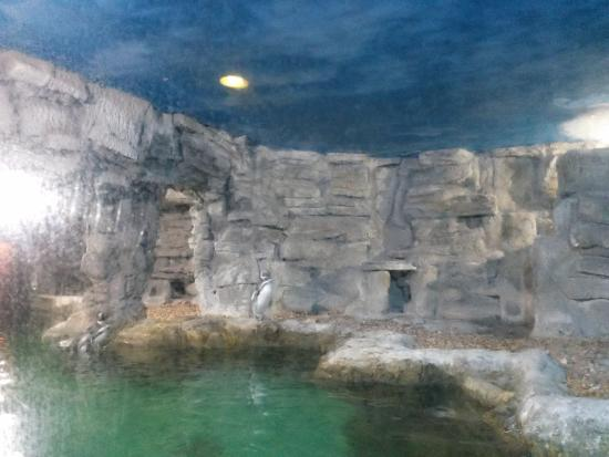 ... dos pinguins - Picture of Sao Paulo Aquarium, Sao Paulo - TripAdvisor