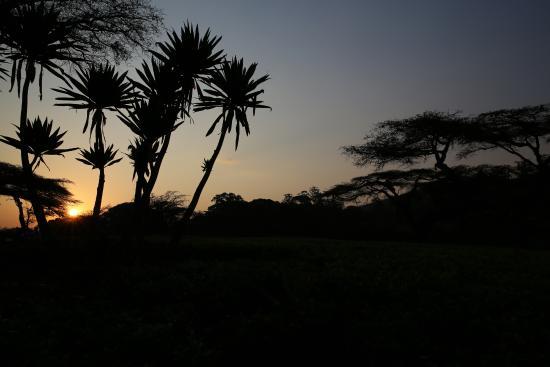 Thyolo, Malawi: Abendstimmung am Aussichtspunkt