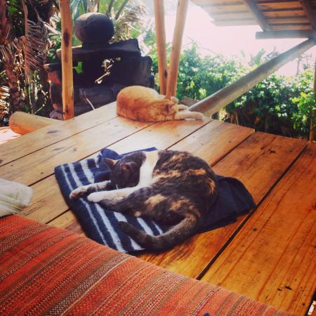 Lubanzi Village, Güney Afrika: relaxing with the cats
