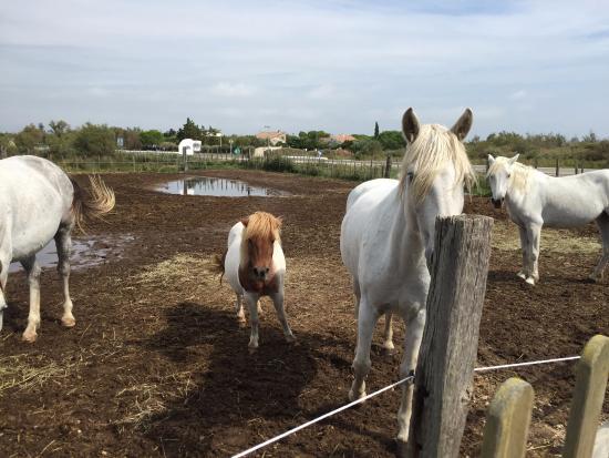 Promenade à cheval de la Fadaise