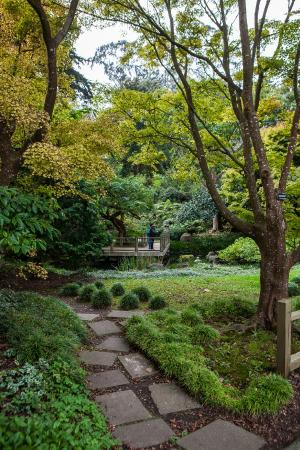 san francisco botanical garden 2018 all you need to know before you go with photos tripadvisor