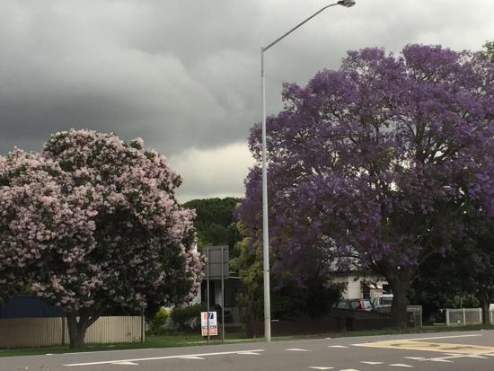 Muswellbrook, Αυστραλία: photo1.jpg