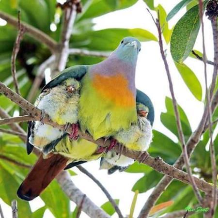 Sierra Nevada de Santa Marta : aves de la zona