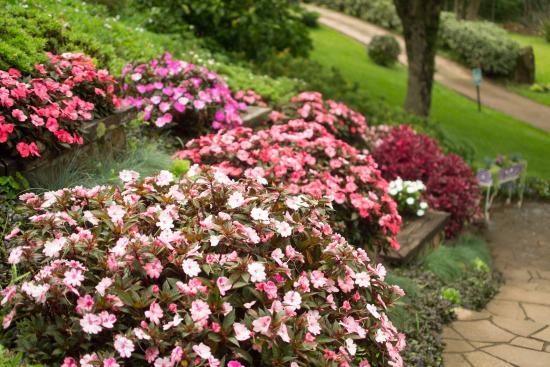 Lugar lindo picture of le jardin parque de lavanda for Jardines de lavanda