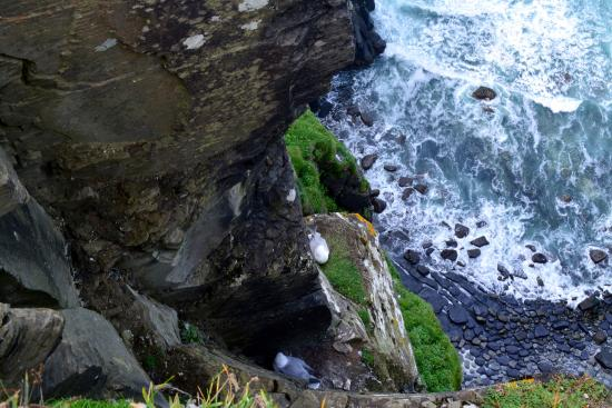 Doolin, Ιρλανδία: Looking down into a seagull's nest.