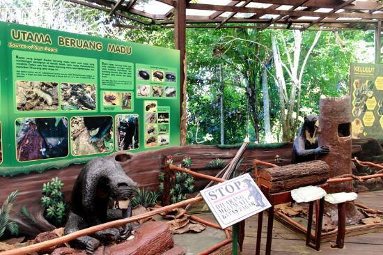 Pusat Informasi Beruang Madu Foto Sun Bear Education And