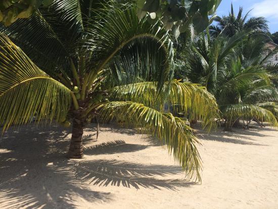 Sun Sea Resort: photo3.jpg