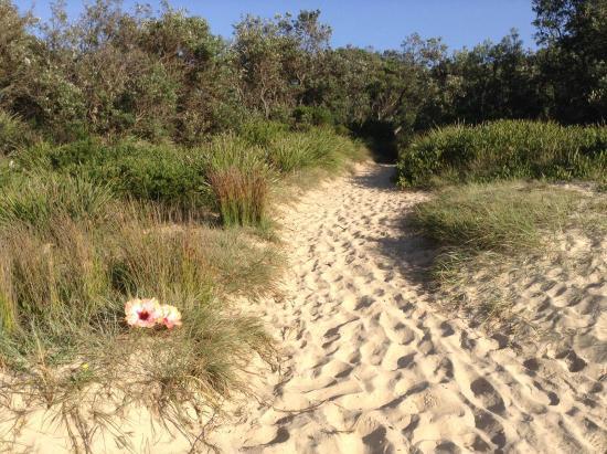 The Peninsular Merimbula : Track to Beach