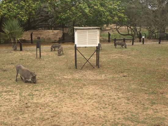 Bonamanzi Game Reserve照片