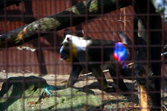 Прага зоопарк как добраться