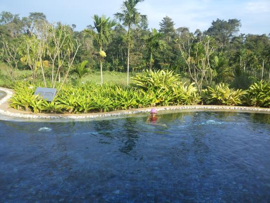 Swimming pool picture of club mahindra virajpet coorg virajpet tripadvisor Hotels in coorg with swimming pool