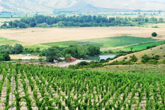 Bulgaria Wine Tours
