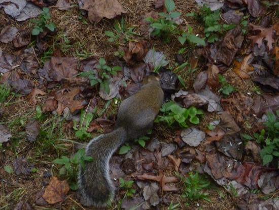 Laurel Mountain Cabins: The fattetst squirrles I've ever seen!