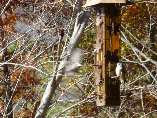 Laurel Mountain Cabins: The bird feeeder was CONSTANTLY busy