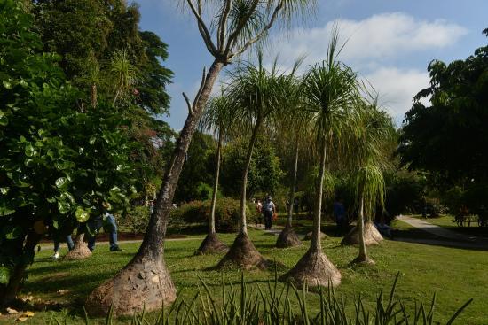 Sipsongpanna Botanical Garden, Chinese Academy of Sciences