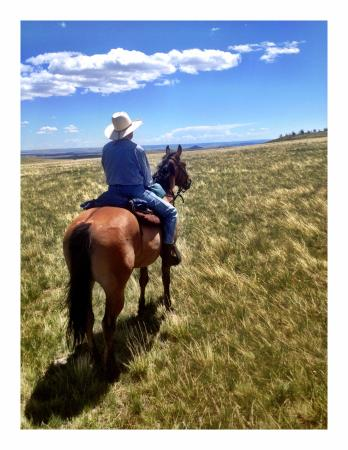 Sweet grass dude ranch hotel reviews big timber mt for Db ranch