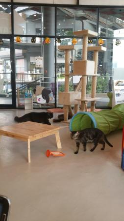 Cat Lovers Cafe'
